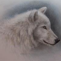 arktische_woelfin_2008