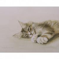 kitten_2009