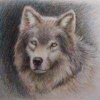 wolf_2008